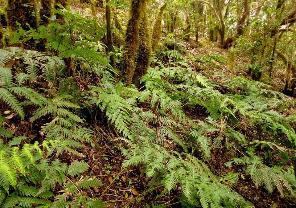 Reserva Natural Especial del Pijaral