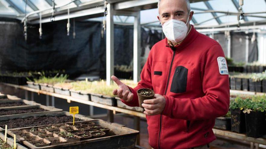 Descubierta una nueva especie de violeta en el Parque Nacional del Teide