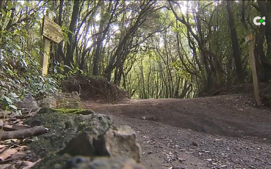 Montañeros de Nivaria pide Educación Ambiental y Buenas Prácticas en la Naturaleza