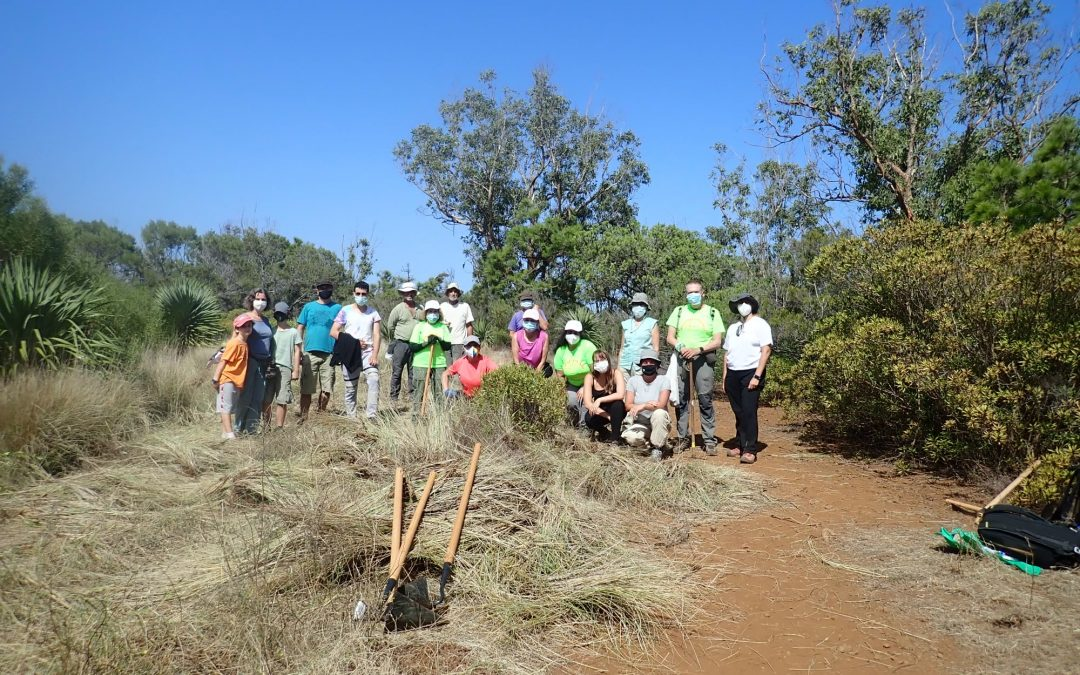 Actividad Medioambiental de Montañeros de Nivaria – Limpieza y Control de Rabo Gato en Montaña La Atalaya, Tacoronte